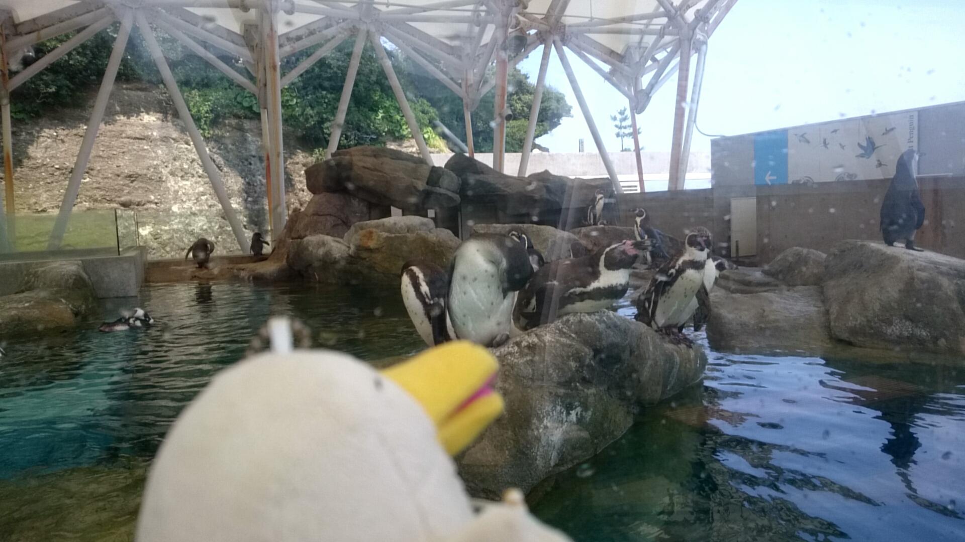 城崎マリンワールド フルボルトペンギン1